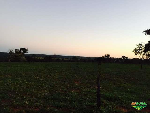 Fazenda no Município do Prata - MG