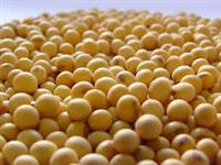 Soja Baixo Padrão/ Farelo de Soja / Quebradinha de Sja 2/5 %