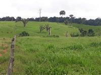 Fazenda com 1100 ha com facil acesso 15km da br