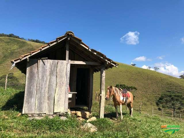 fazenda para gado