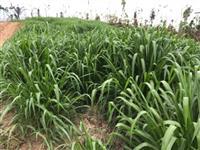 OPORTUNIDADE!!Fazenda 500 alq/ 250 de Sao Felix do Xingu-PA