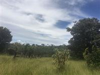 Fazenda Chau no município de Luziânia - GO a 90 km de BRASÍLIA -DF