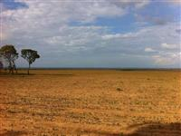 Fazenda em Balsas-MA 1350ha