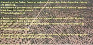 Fazenda de Eucalipto - Projeto para Termo Eletrica - 40 mil ha