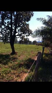 Fazenda Pedra Preta MT
