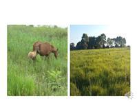 Linda fazenda, com excelente estrutura na Região do Jacadigo - Forte Coimbra -  Corumbá - MS