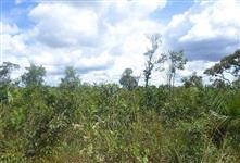 Excelente Fazenda para Reserva Legal - Região de Igarapava