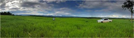 Fazenda Maravilhosa de 750 ha