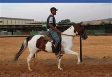 Venda - Égua Margalarga Marchador - Top Registrada