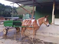 Vendo Burro com carroça