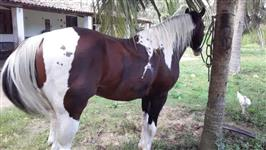 Cavalo Pant Horse