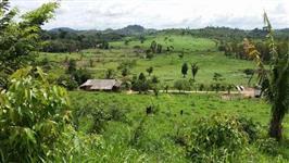 Fazenda para cria, recria e engorda de bovinos