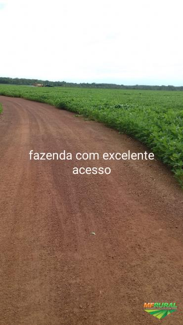 Fazenda, região de Pedro Afonso-TO