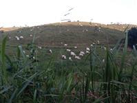 Fazenda 387 Hect. em Juquiá SP, média de 50% em pasto, muita água por gravidade, casa sede e +2