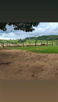 Fazenda Mato Grosso do Sul 1.930 HECTARES PRONTOS