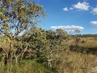 Fazenda na região de Niquelândia-GO
