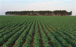 fazenda de quase 4000.000 de hectares a venda metade do preço