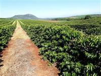Fazenda para Café no Sul de Minas Gerais - Boa Esperança/MG