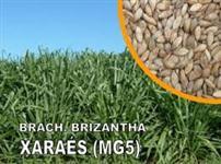 Semente de Brachiária Brizantha XARAES MG5 (Peletizada) (10Kg) GERMIFORTE