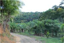 Sitio com 620.000 m2, com 37.000 pes de Palmito Pupunha