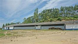 Aviario DARK HOUSE Semi novo. Pouco tempo de uso. SEARA/JBS FOODS.  terreno com 8 hectares