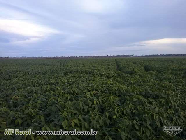 Venda de Fazenda de Soja