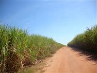 Fazenda a venda em Mogi Mirim, em cana, �tima localiza��o
