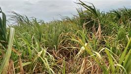 Fazenda em Tatuí/SP, excelente localização, ideal para logística, indústria, empreendimento