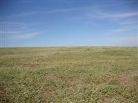 Fazenda em soja a mais de 15 anos. Ótima localização