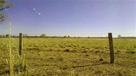 Fazenda a venda em Vila Rica, Mato Grosso com 3.500 hectares