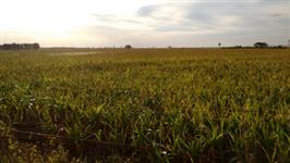 Fazenda em lavoura em Ipiaçu
