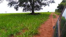 Fazenda entre Uberlândia e Monte Alegre