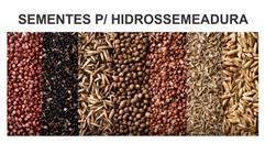SEMENTES PARA HIDROSSEMEADURA
