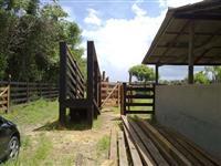 Curral para gado bovino completo para 150 Animais