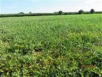 Fazenda para fruticultura/ pecuaria 93Ha. Pirapora-MG