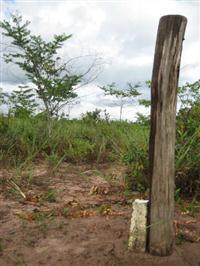 Comodoro, 499 hectares