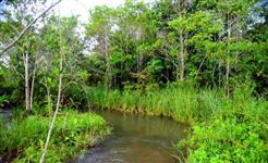 fazenda para compensação ambiental no Párana
