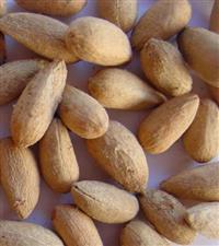 sementes de NEEM