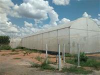 Estufa para Mudas e Hortaliças. 1.776,00 m²