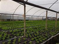 Composto orgânico  inxalrido de cogumelos