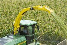 Silagem de milho a granel e ensacada com análise.