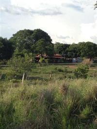 Fazenda Novo Horizonte no Município de Conceição do Tocantins