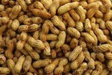 Vende - se Amendoim Torrado e Descascado