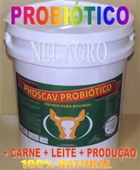 PROBIOTICO PARA BOVINOS PHOSCAV PROBIOTICO + CARNE + LEITE  E MAIS PRODUÇÃO. KG