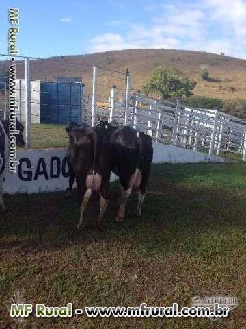 Leilão Fazenda Chalé 04 de julho 2015