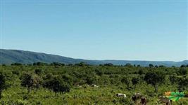 Fazenda em Alto Paraíso GO