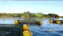 Tanques Redes Para Peixe Vendo Urgente