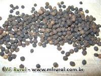 Pimenta do Reino em grãos direto do produtor.