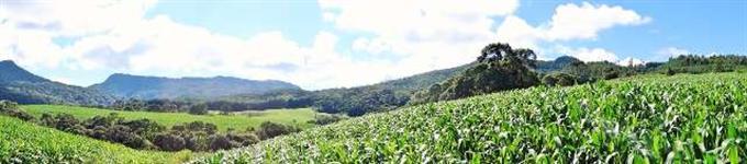 Pequena Fazenda 55 hectares com 30 hectares de aproveitamento.