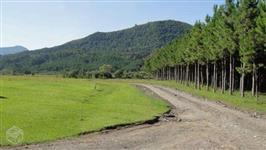 Fazenda 277 hectares com Floresta com 150.000,00 Pinus Elliottis